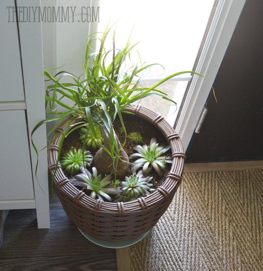 Potted succulents by an entry