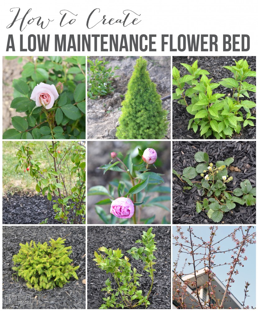 Create a low maintenance flower bed our front yard for How to plant bushes in front of house