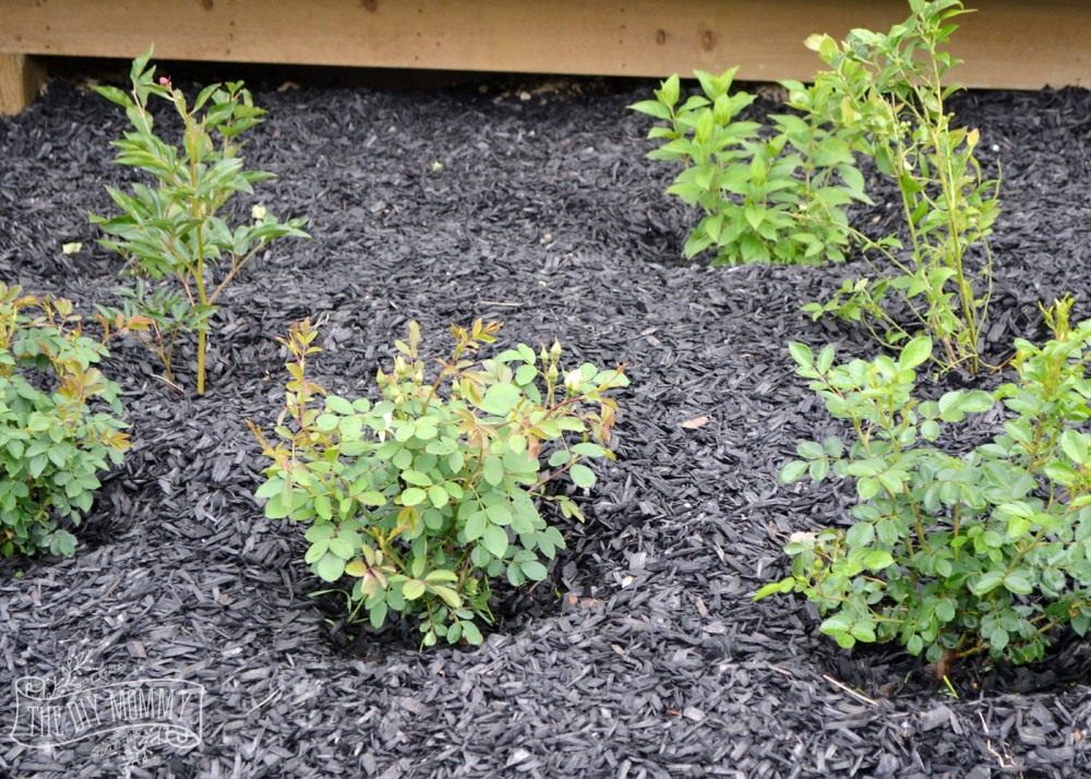 How to create a low maintenance flower bed. These are great basic tips, and some good ideas of zone 3 hardy, romantic plants!