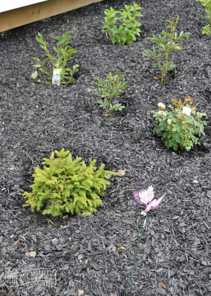Create a low maintenance flower bed our front yard for Low maintenance green plants