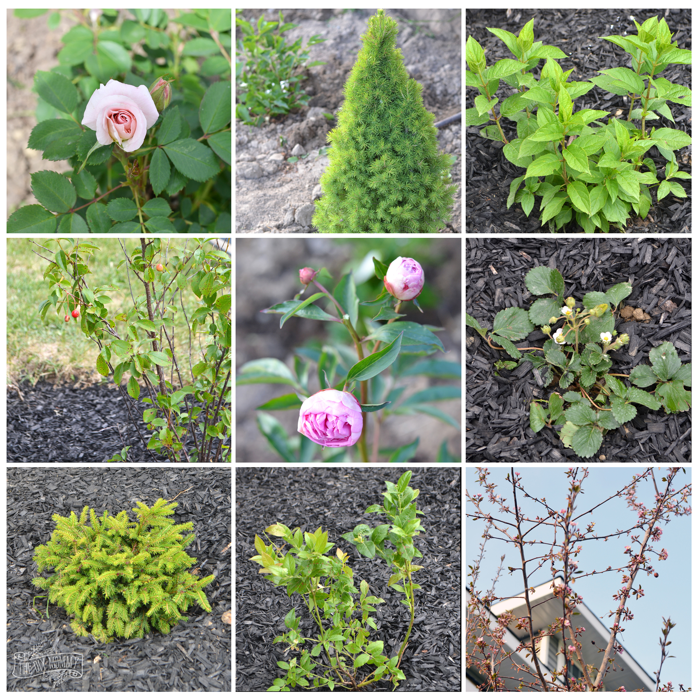 Create A Low Maintenance Flower Bed (+ Our Front Yard Progress)