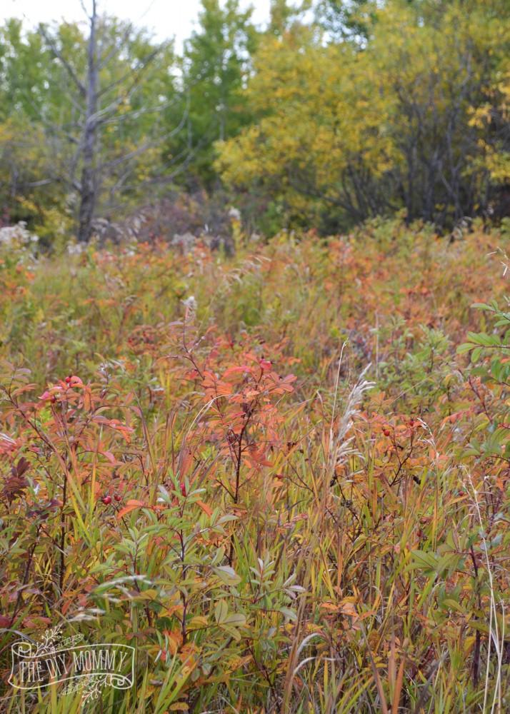 Fall meadow in Alberta, Canada