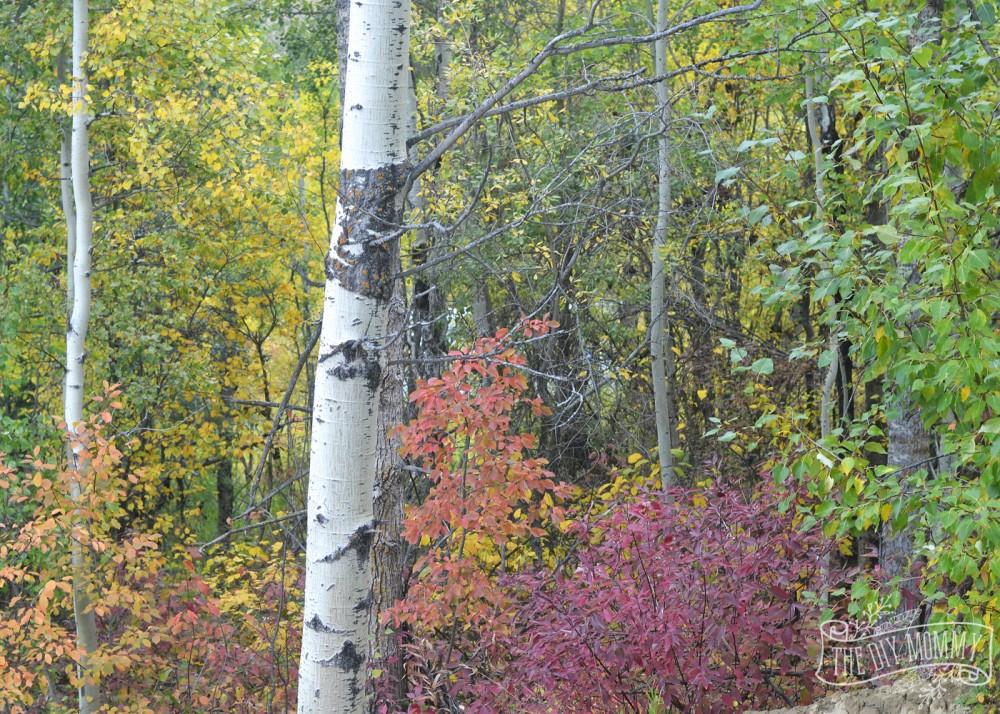 Fall forest in Alberta, Canada