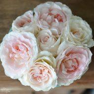 How to Grow Hardy Shrub Roses