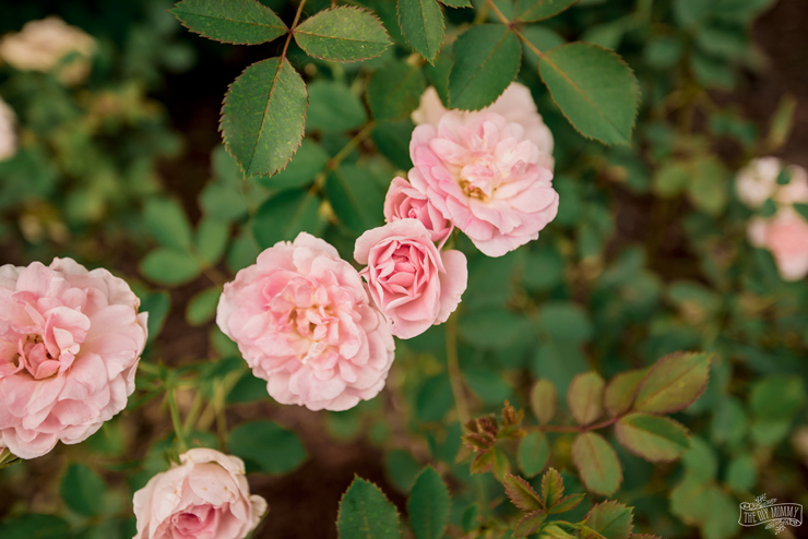 Low Maintenance Zone 3 Perennial Flower Garden