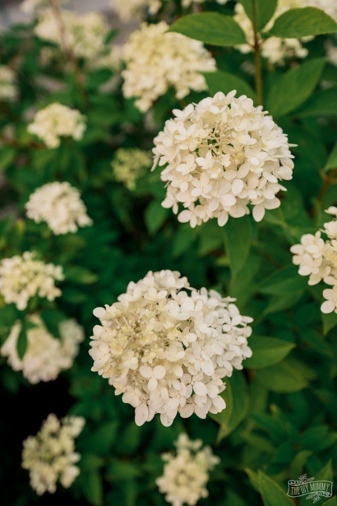 Low Maintenance Zone 3 Perennial Flower GardenLow Maintenance Zone 3 Perennial Flower Garden