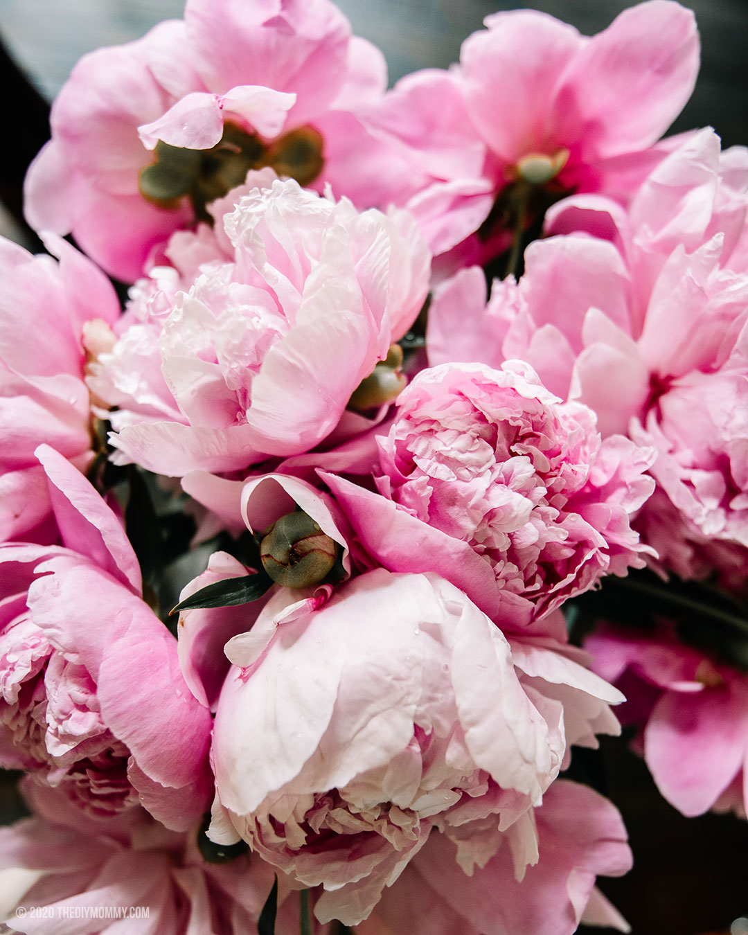 Free Peony Wall Art & Lock Screen Download